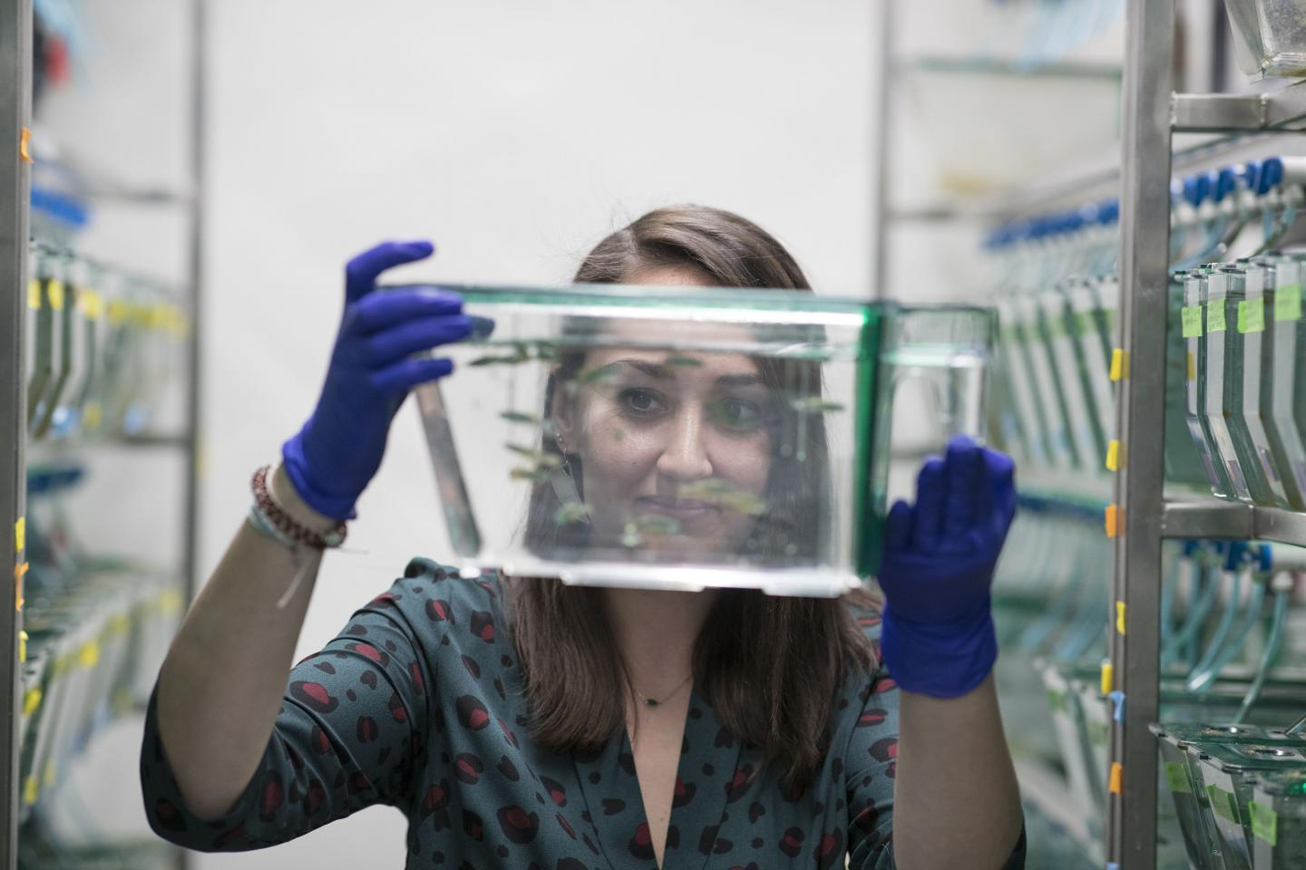 Researcher and Zebrafish