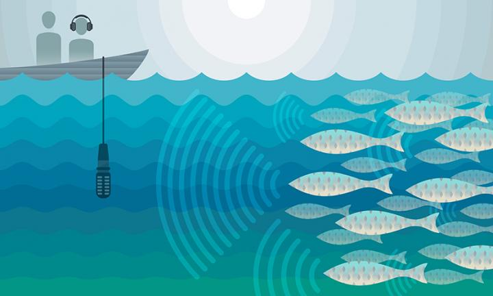 Counting Fish with Sound