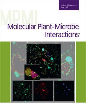 MPMI June Cover
