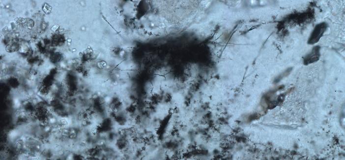 The filamentous microfossils