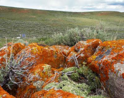 Sagebrush Field Site