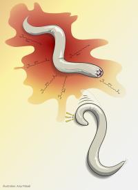 Salk -- Chalasani -- Pribadi Illustration