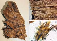 Here's what thousand-year-old down feathers look like
