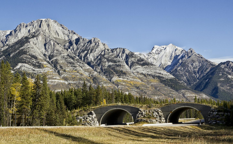 Wildlife overpass near Banff National Park.