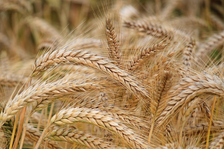 Ready for Harvest