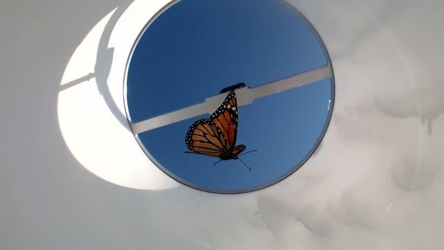 Butterfly Flight Simulator