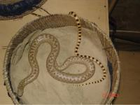 A View of Live Reptiles