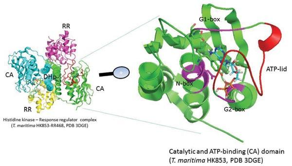 Rationale and Prospects of Targeting Bacterial Two-component Systems for Antibacterial Treatment of Cystic Fibrosis Patients
