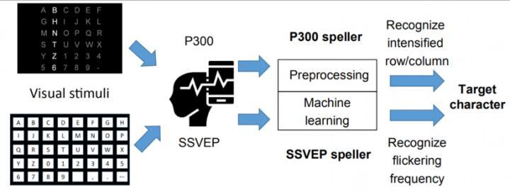Figure 1. Workflow of a P300 speller (top path) and an SSVEP speller (bottom path).