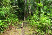Rare Amazonian Butterfly Named After British National Treasure Sir David Attenborough (3/3)