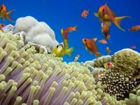 Helping Corals to Cope with Pressure (1 of 2)