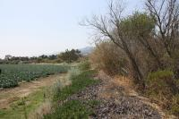 Broccoli Habitat