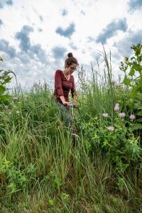 Switchgrass Variety Trials at MSU's Kellogg Biological
