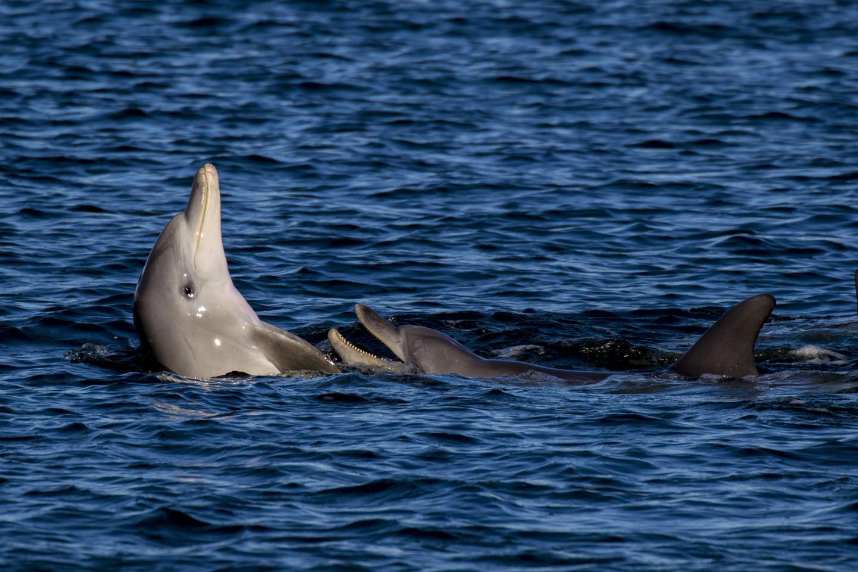 Dolphins in Fremantle inner Harbour