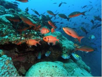 Gulf of Mexico Ecosystem