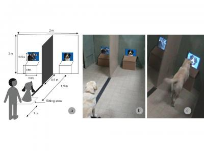 Visual Discrimination of Species in Dogs