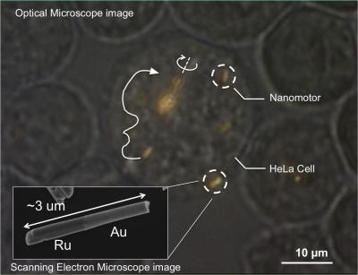 Nanomotors Are Controlled, for the First Time, Inside Living Cells