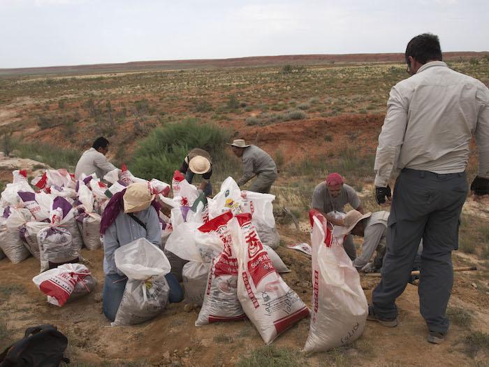 Collecting sediment