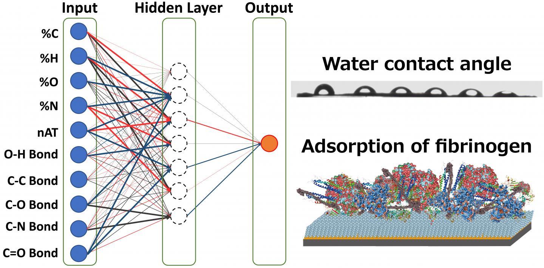 Artificial Neural Network Model