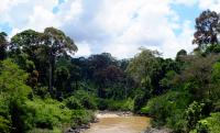 Tropical Forest in Borneo