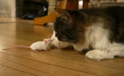 Cat vs. Mouse