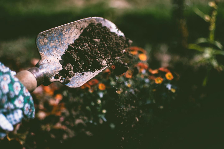 Stock gardening photo
