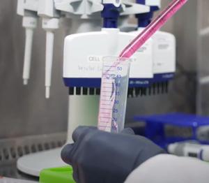 Lab bench research in Veesler Lab at UW Medicine