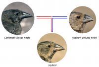 Beak Morphology