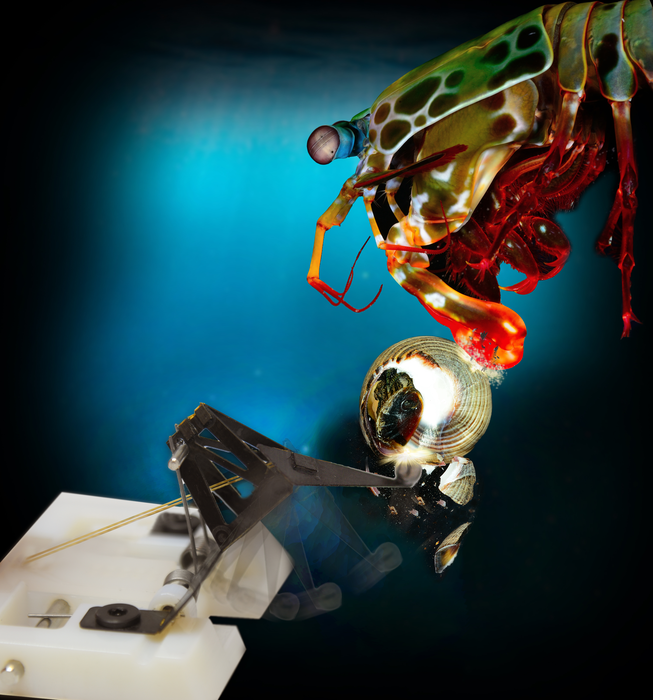Small, mighty robots mimic the powerful punch of mantis shrimp