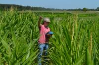 Corn Height Measurements