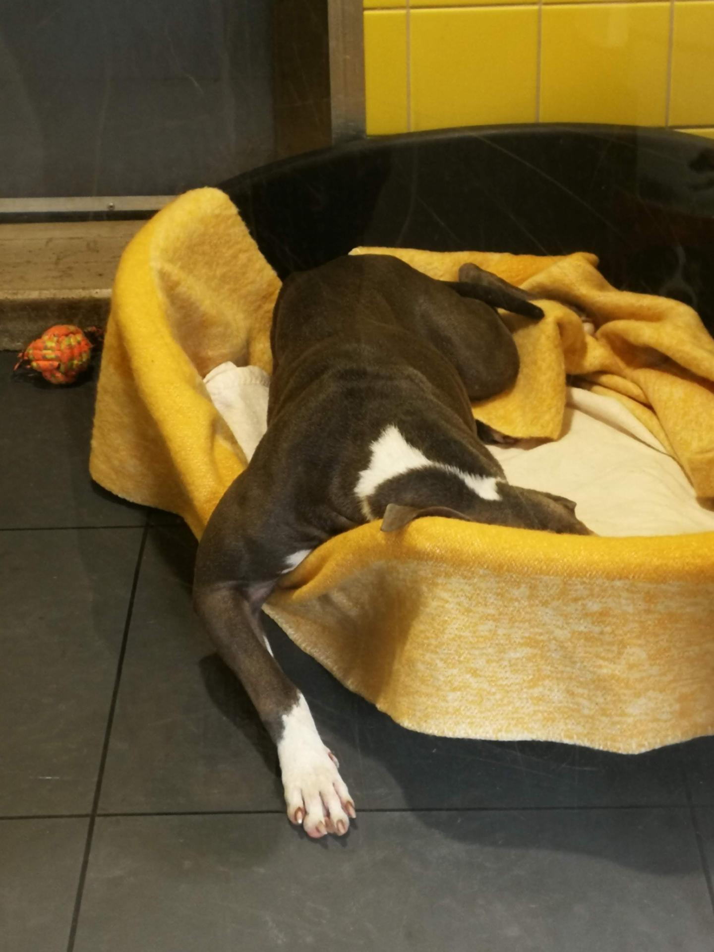 Dog resting in an animal shelter