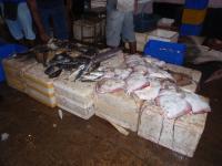 Ray Catch in Sri Lanka