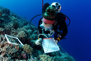 The Global Reef Expedition surveyed and mapped over 1,000 reefs in 16 countries across the Atlantic, Pacific, and Indian Oceans as well as the Red Sea.