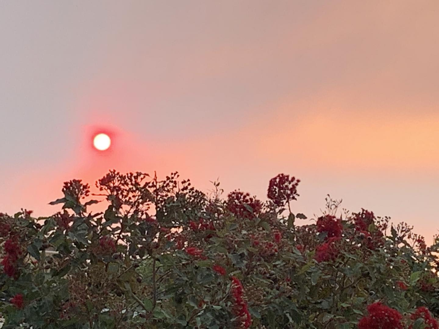 Red Sun View from Nepean Hospital