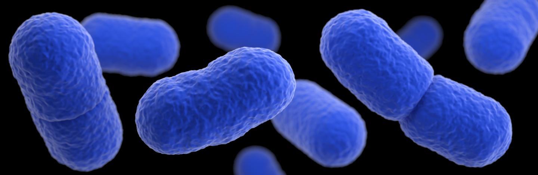 Listeria 3-D
