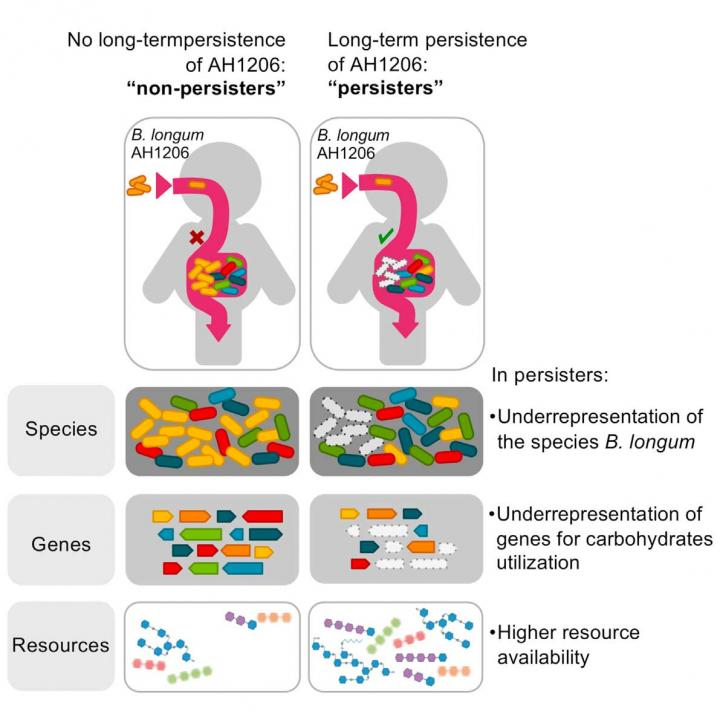Bacterial Strain Persistence in the Gut