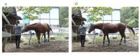 Horse Making Demands
