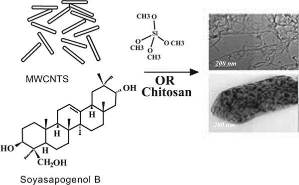 Preparation, Characterization and In vitro Biological Activity of Soyasapogenol B