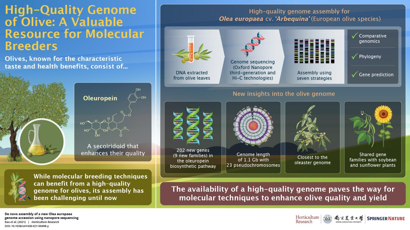 High-Quality Genome of Olive: A Valuable Resource for Molecular Breeders
