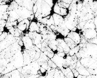 Mouse Induced Neurons