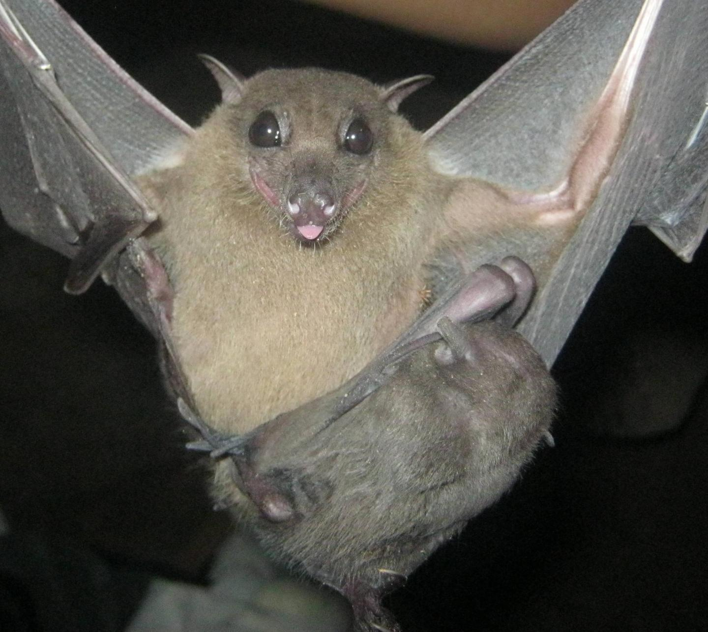 Mother and Pup Fruit Bats