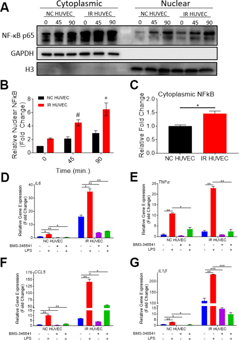 Regulation of senescence-associated hyper-activation via NF-κB pathway