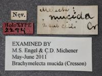 Labels Associated with the Mystery Bee