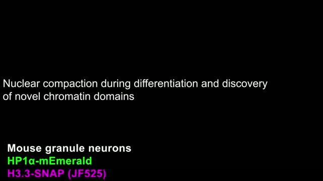 Chromatin Organization