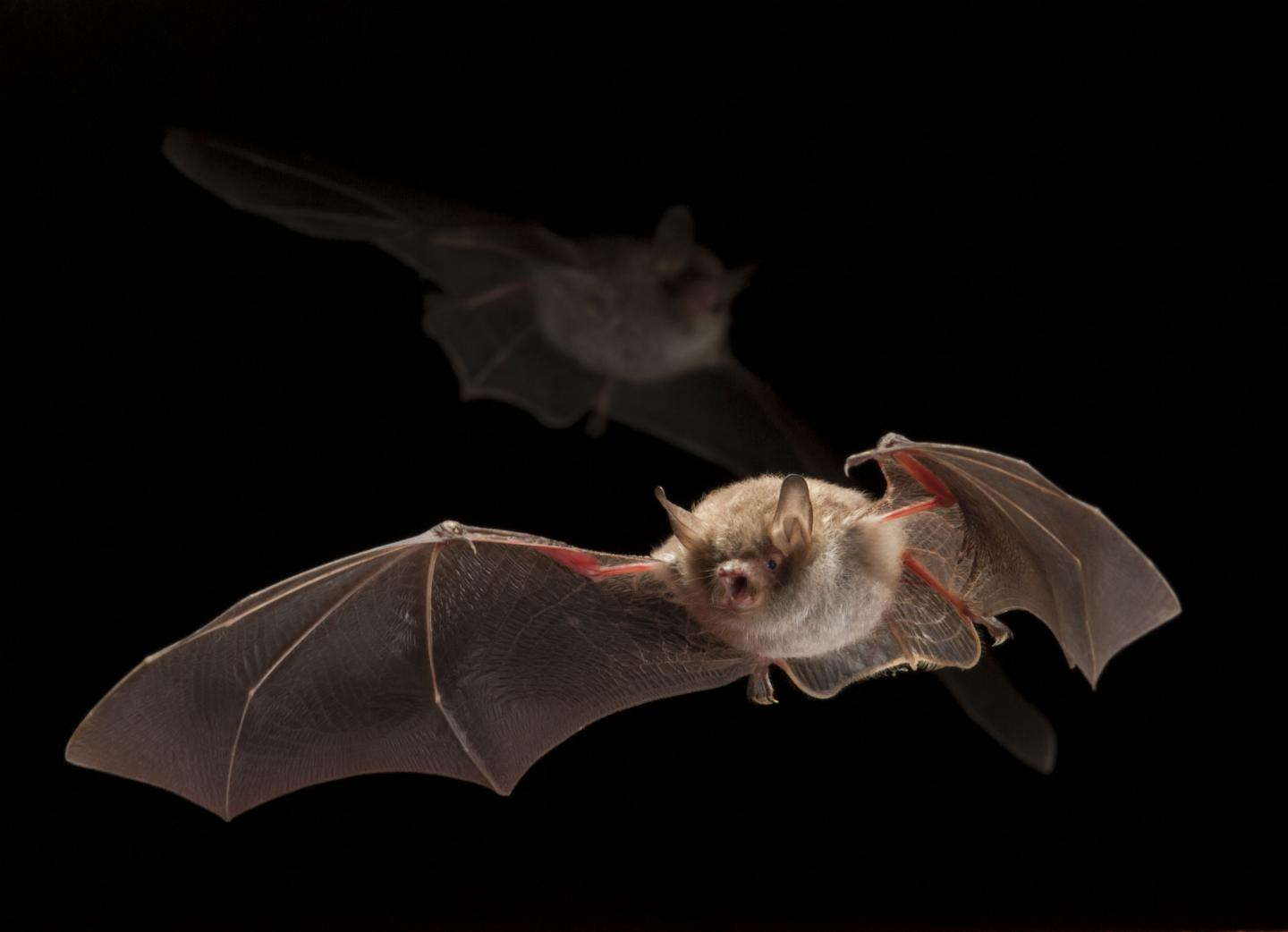 Light-shy Bats are Influenced by Light