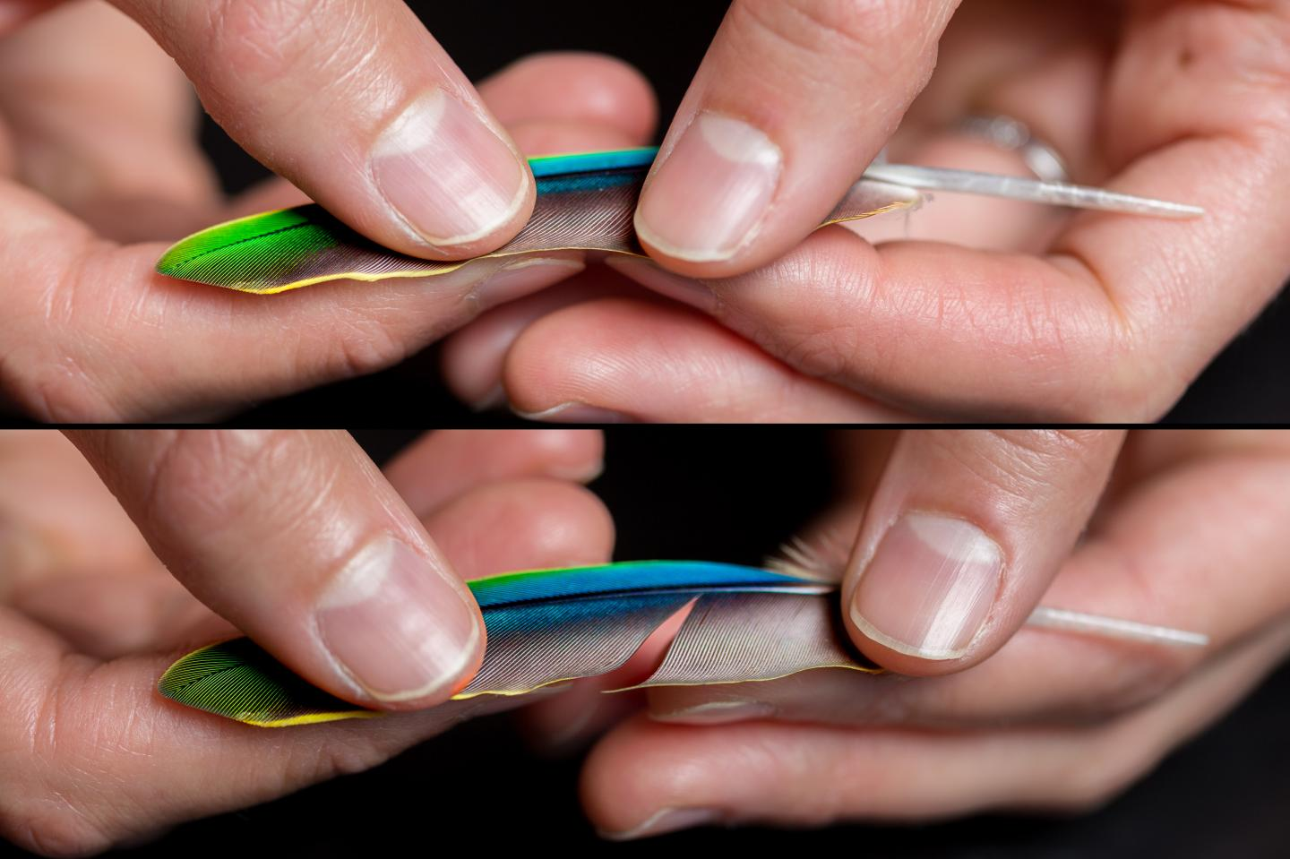 Feather Zipping and Unzipping