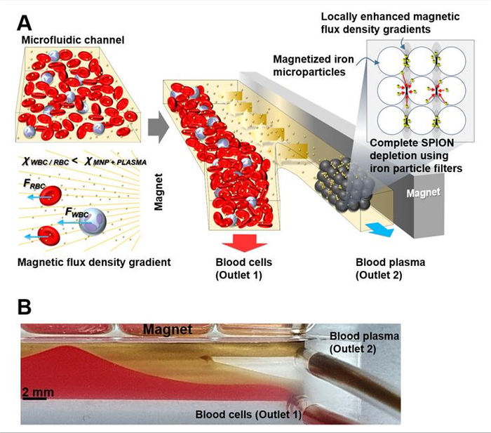 Schematic illustration of the microfluidic device for blood plasma separation