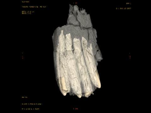 CT scan of a <i>Diplodocus</i> Tooth