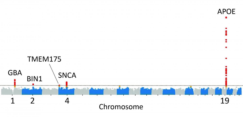 Lewy Body Dementia Genetics