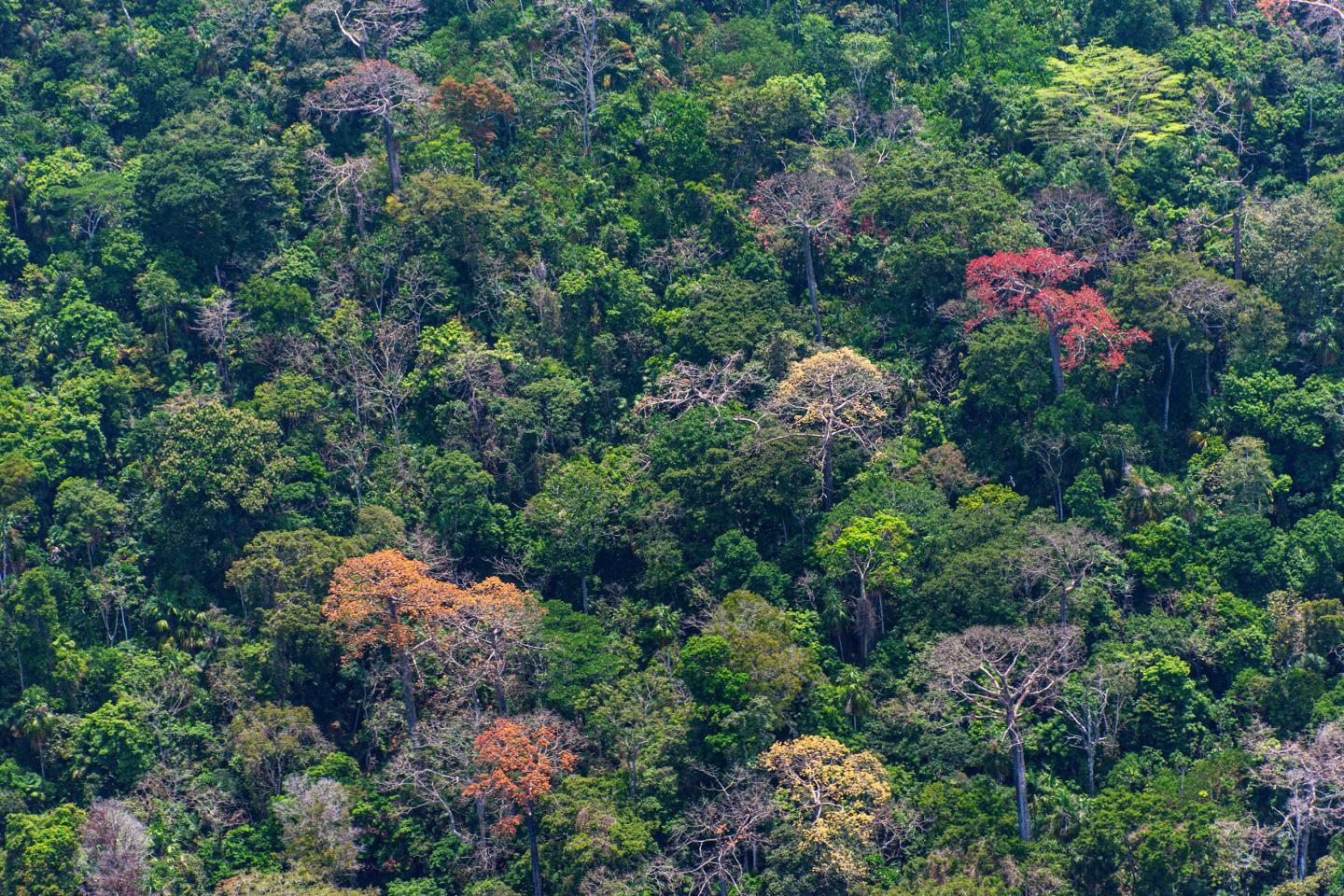 Tropical forests 1